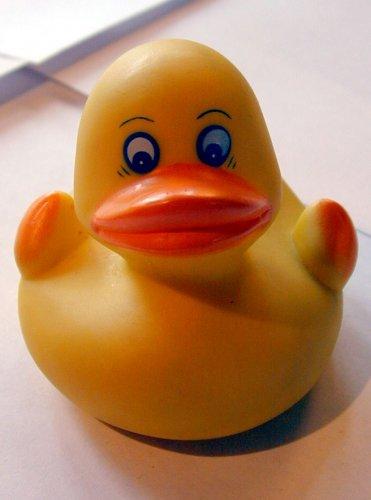 http://dannaden.files.wordpress.com/2011/06/duck.jpg